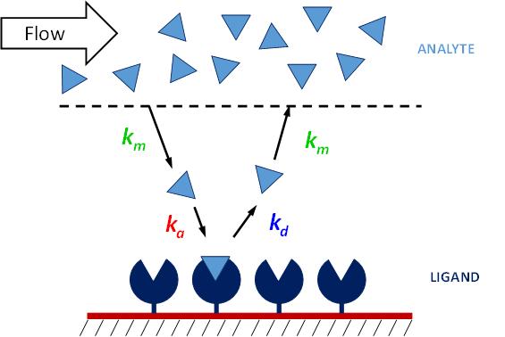 Powierzchniowy rezonans plazmonowy (metoda SPR) ligand