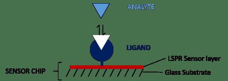 powierzchniowy rezonans plazmowy Sensor, ligand, analit